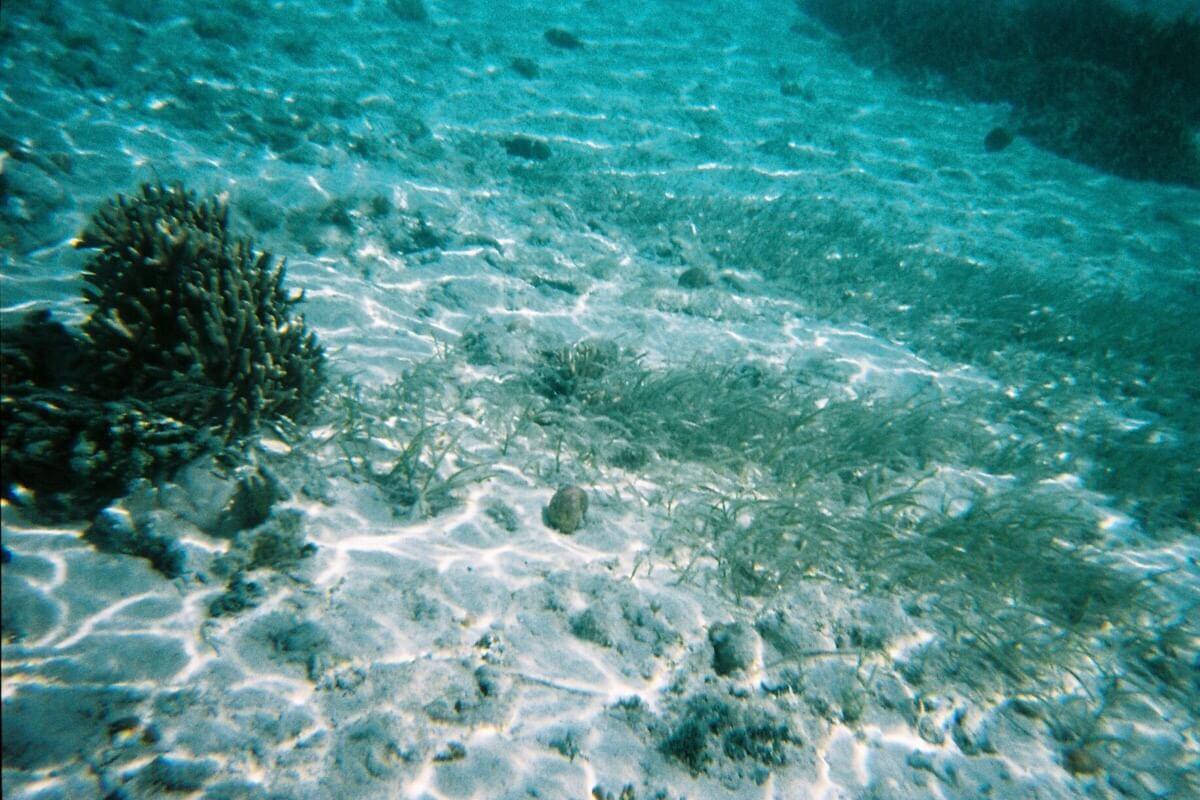 使い捨て水中カメラ・写ルンです
