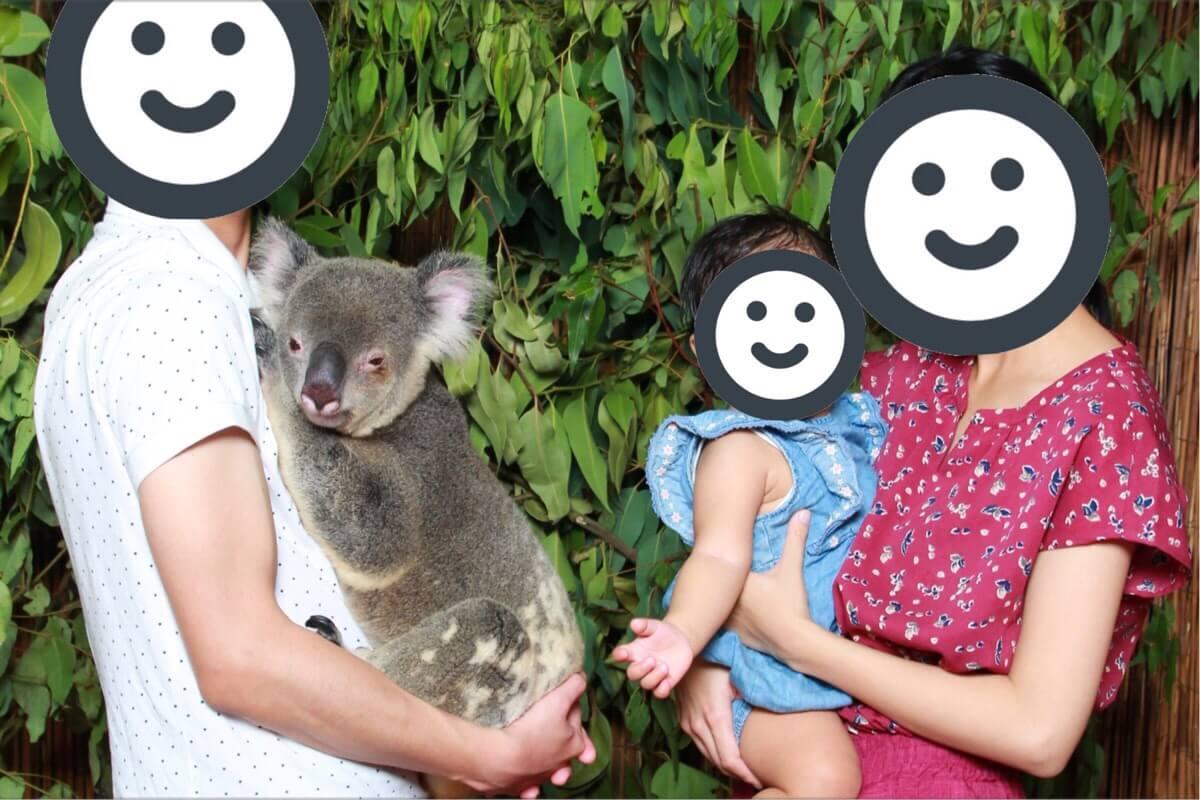 キュランダでコアラを抱っこ体験